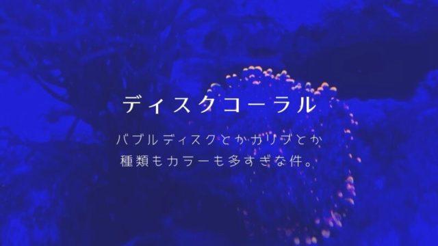 サンゴ ディスクコーラルのカラー、種類