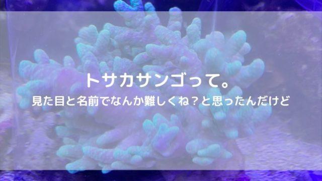 トサカサンゴ 飼育